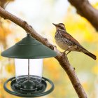 Decorative Hanging Feeder Outdoor  Garden  Decor Bird Food  Container Bird  Food  Holder green_Size: 16.5*16.5*19.5