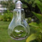 Plant Glass Bulb Shape Hydroponic Container