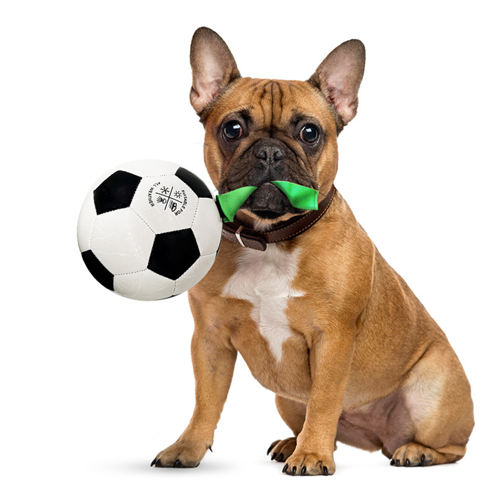 Pet Toy Interactive Dog Football Shape Biting Training Exercise Toy as picture show