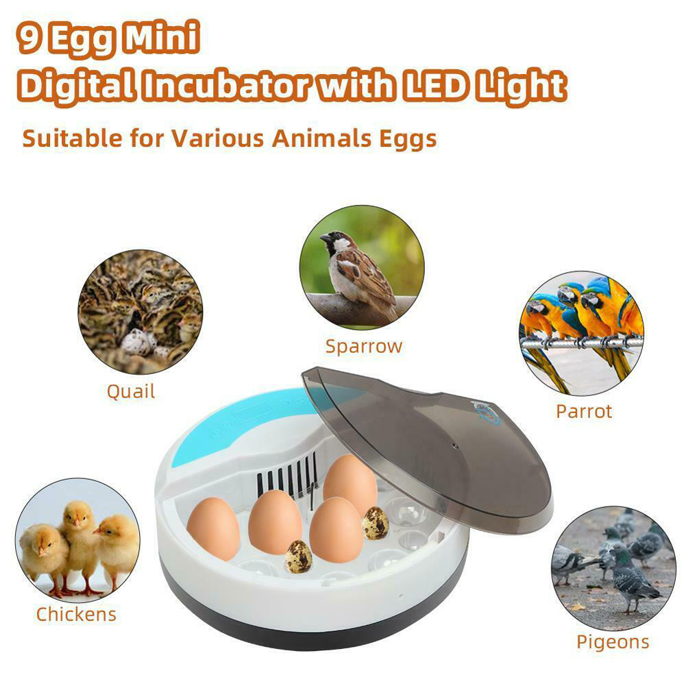 9 Eggs Incubator Stable Temperature Control Compact Button Led Light for Incubation Tools British regulatory