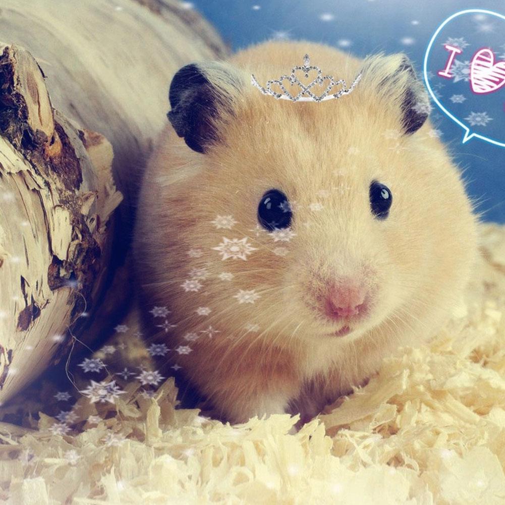 Wood Shavings Sawdust Pet Bedding Deodorization for Rabbits Hamster Guinea Pig 500 g / bag