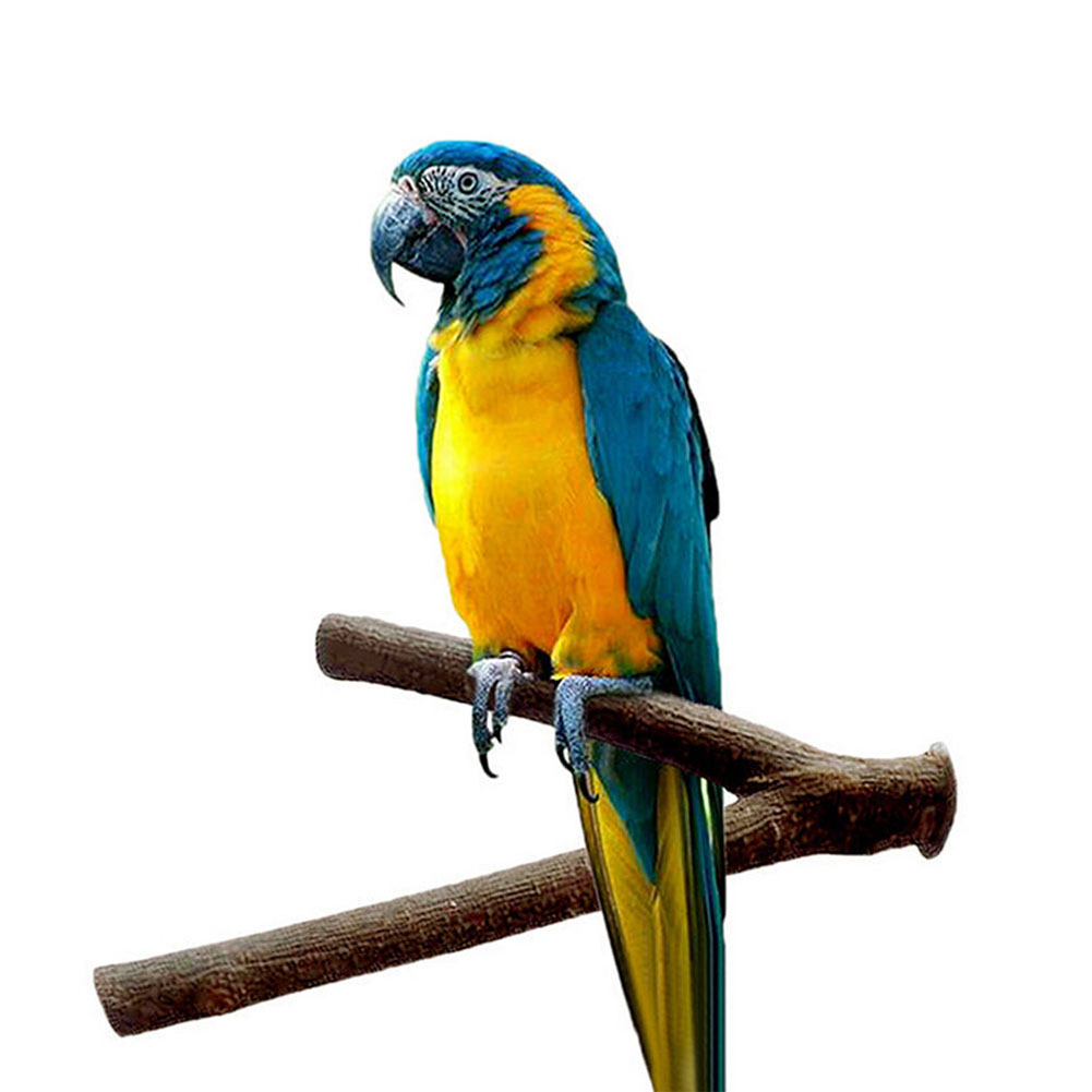 Pet Parrot Raw Wood Fork Stand Rack Toy Strong Perch Branch for Bird Cage Diameter: about 2cm, length 20cm