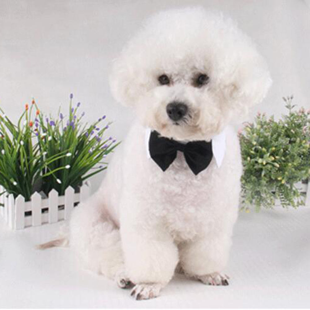 Pet Bow Tie Cotton Collar for Puppy Dog Cats Cosplay Costume Accessaries white_L