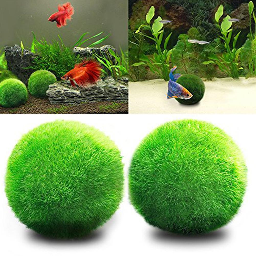 Living Green Seaweed Ball for Aquarium Fish Tank Decoration green