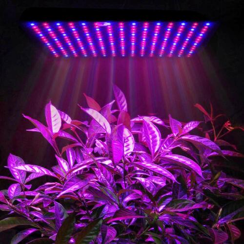225LEDs Thin Grow Light Bulbs for Indoor Plant Veg Succulent Plants Flower Red + blue_European regulations