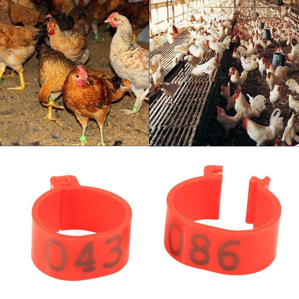 100Pcs Open-ended Foot Rings for Chicken Ducks Geese