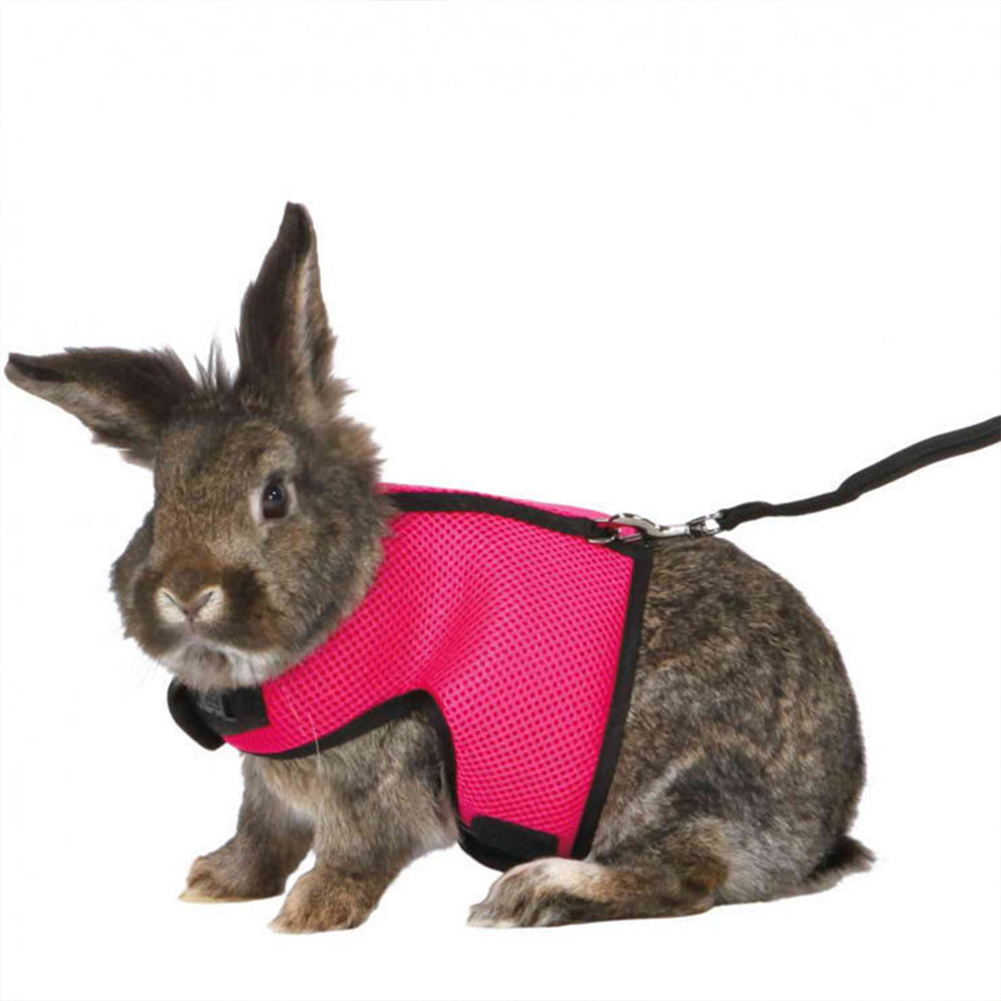 Leash Rope Nylon Vest-style Chest Pet Walking Rope For Squirrel Hamster Guinea Pig rose Red