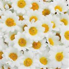 100Pcs 4cm Artificial Flowers White Daisy with Yellow Center for Wedding Party Home Decoration DIY Scrapbook