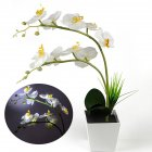 9LEDs Simulate Phalaenopsis Pot Lamp with White Light for Decoration White light