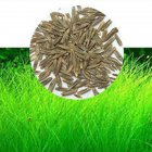 Aquarium Plant Aquatic Water Grass Decoration
