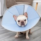Collar Dog Cat Recovery Anti-Biting Ring Headgear for Protective Wound Pet Supplies blue_M