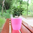 Colorful Self Watering Round Planter Flower Pot Home Garden Decor Professional Green Plant Vase Translucent pink_Big (M7)