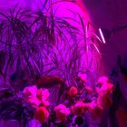 E27 110V 38 LEDs High Brightness Plant Grow Light for Indoor Garden Greenhouse Supplies Red blue light
