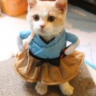 Funny Cat Dog Costume Uniform Suit Clothes Puppy Dressing Up Suit Party Cosplay Clothes XL