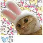 Funny Pet Cat Warm Rabbit Shape Hat Costume Cosplay Photo Props Little white rabbit hat_One size M