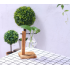 Glass Vase Tabletop Hydroponics Plant Bonsai Flower Pot with Wooden Tray Home Table Decoration  2 Vase