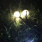 Outdoor Solar Garden Stake Lights LED Garden Landscape Decorative Lawn Lamp 2PCS warm yellow light