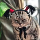 Pet Braid Shape Headgear Hat Cosplay Prop for Halloween Cats Dogs Wear One size