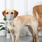 Pet Dog Soft Face Cotton Mouth Cover Respiratory Filter Anti-fog Haze Muzzle Face Guard gray_M