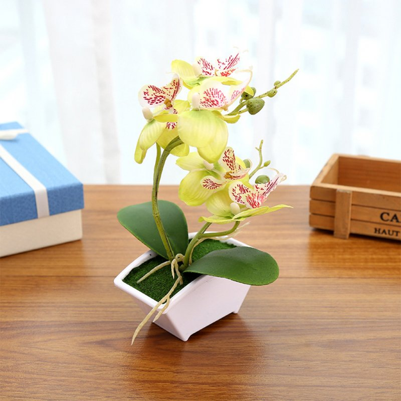Simulate Butterfly Orchid with Flowerpot