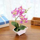 Butterfly Orchid Artificial Decoration