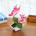 Simulate Butterfly Orchid with Potted