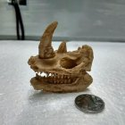Simulate Resin Skull Landscape Ornament for Reptile Cave Aquarium Terrarium Decoration  Rhino Skull
