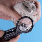 Small Pet Nail Clipper with Magnifying Glass for Hamster Hedgehog Chinchilla Guinea Pig black