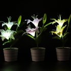 Solar Waterproof Pink Lily Flower LED Lamp