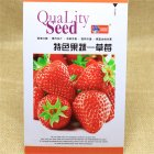 Strawberry Flower Seed Fruit Herb Seed 6g
