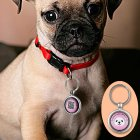 This Anti Loss Dog Pendant is the perfect gadget for your pet to make sure he ll always find his way back home safe